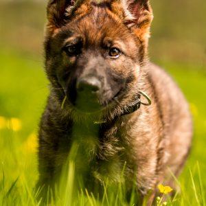 Darmgesundheit Hund